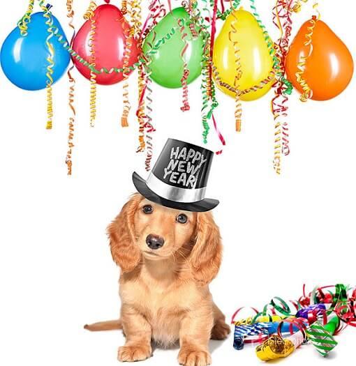 cachorro-com-bexigas-enfeites-e-chapéu-de-feliz-ano-novo